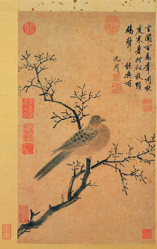 Shen Zhou Turtledove Calling For Rain Chinese Bird